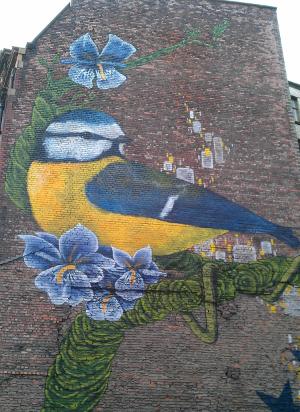 med big blue bird NQ